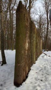 Limes Burgstall-Wald