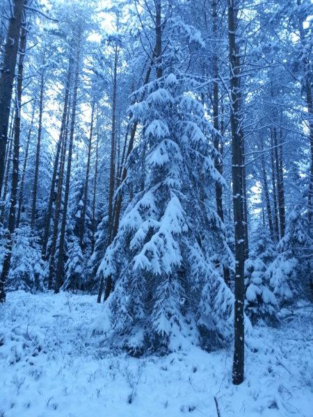Moenchswald Winter