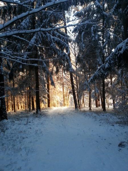 Moenchswald Winter2