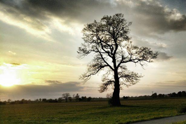 Wolkig mit Baum