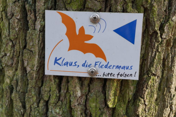 fledermaus-weg-burgstall